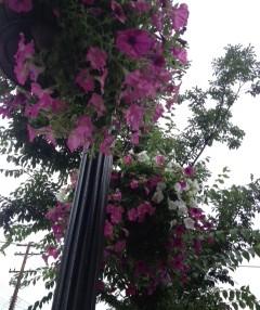 Bill Goodrich to Head Hanging Flower Basket Initiative for 2015