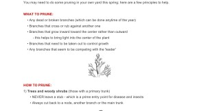 Pruning Tips from the Garden Committee