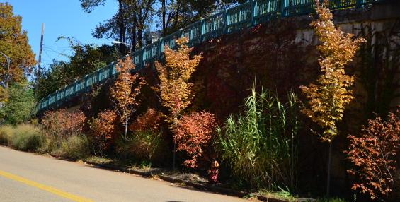 Brighton Heights Boulevard: The Great Wall Garden
